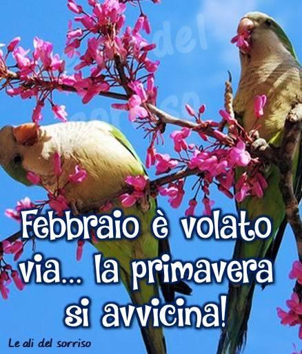Febbraio è volato via... la primavera si avvicina!