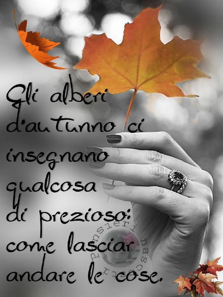 Gli alberi d'autunno ci insegnano...
