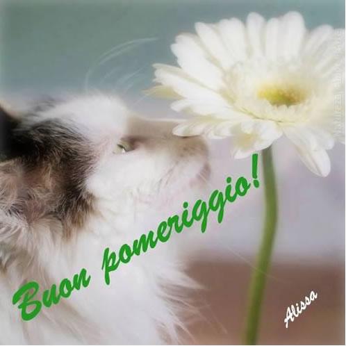 Fiore immagini e fotos gratis per facebook topimmagini for Immagini buon pomeriggio due chiacchiere