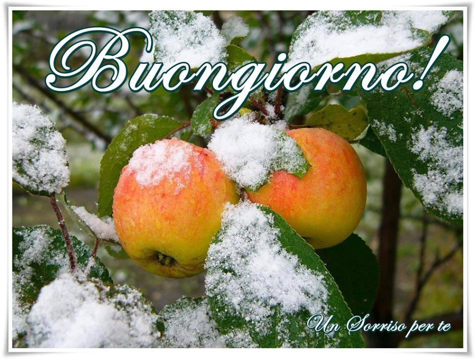 Buongiorno immagini e fotos gratis per facebook for Top immagini buongiorno