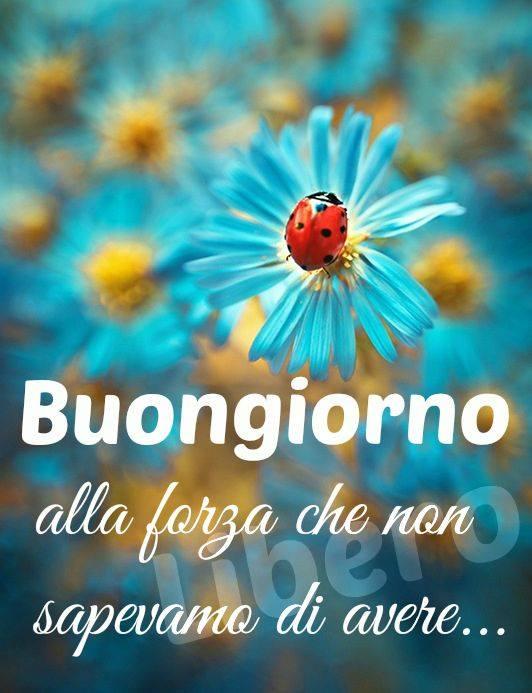 Buongiorno immagini e fotos gratis per facebook for Foto belle di buongiorno