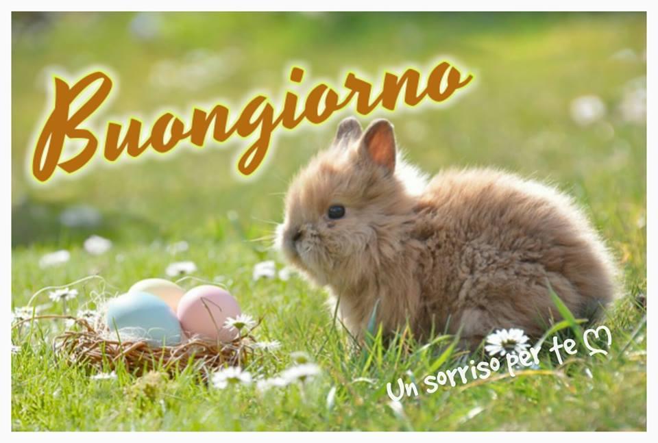 Buongiorno immagine 2616 topimmagini for Foto buongiorno amici