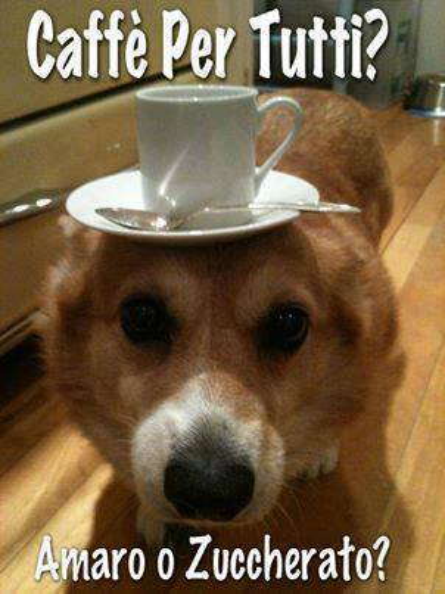 Caffè per tutti? Amaro o zuccherato?