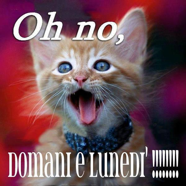 Oh no, domani è lunedi !!!!!