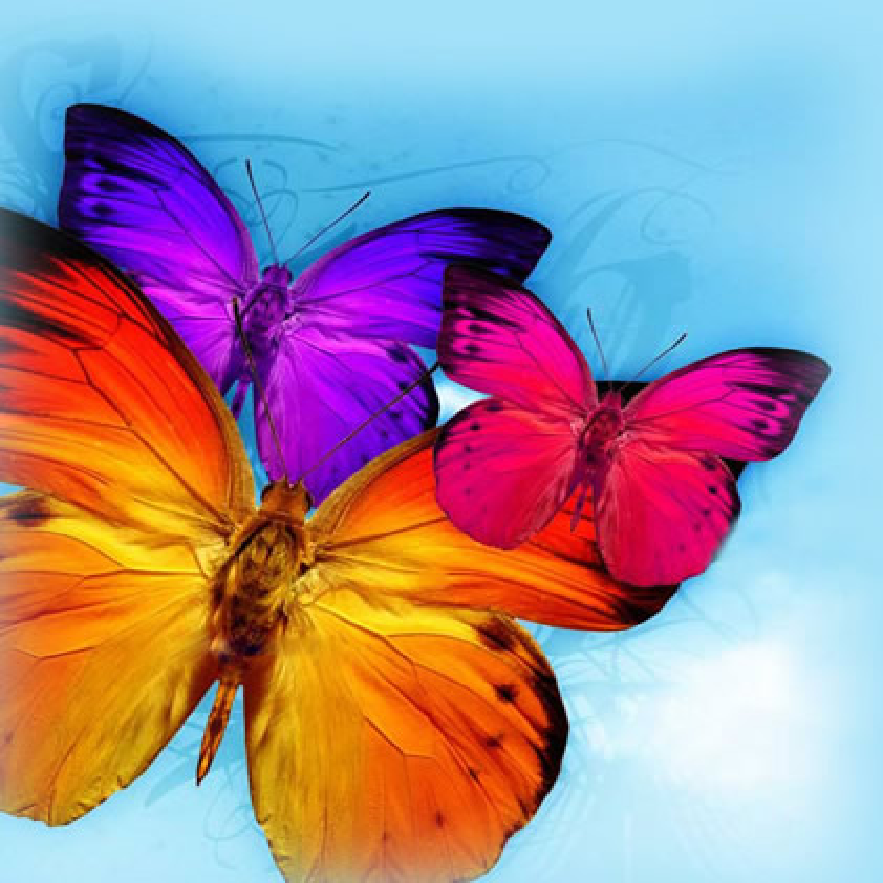 Farfalle immagine 12