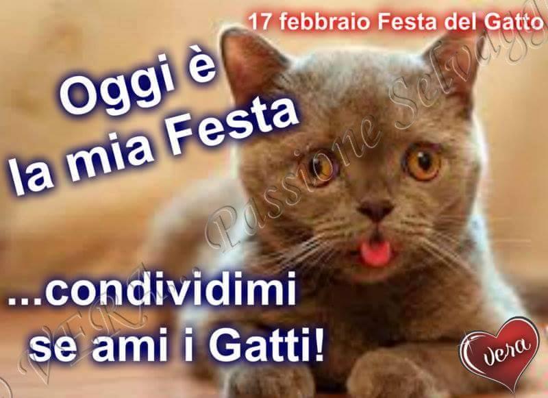 Oggi la mia festa condividi se ami i gatti immagine - Immagine del gatto a colori ...