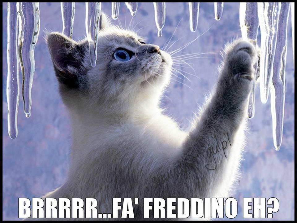 Brrrrr... Fa' Freddino Eh?
