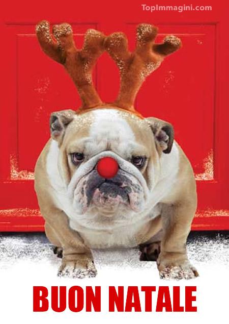 Natale Divertente immagine 5