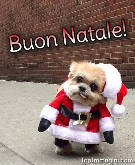 Natale Divertente immagine 13
