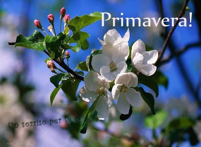 Primavera immagini e fotos gratis per facebook topimmagini for Immagini desktop primavera