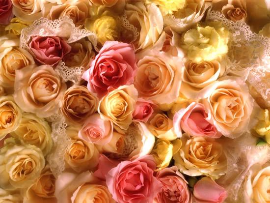 Rose immagine #248