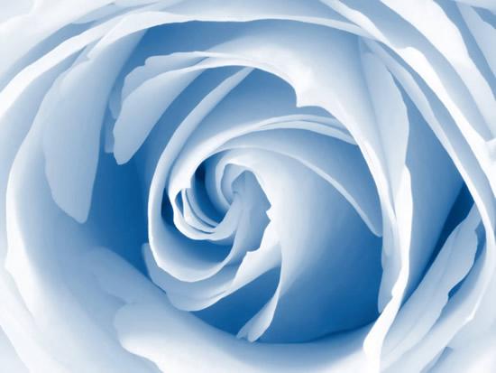 Rose immagine #256