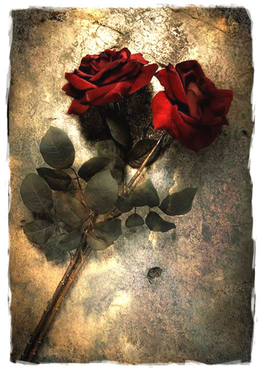 Rose immagine #264