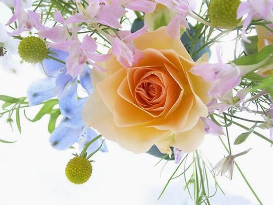 Rose immagine 13