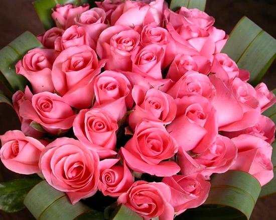 Rose immagine #269