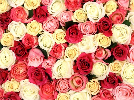 Rose immagine 2