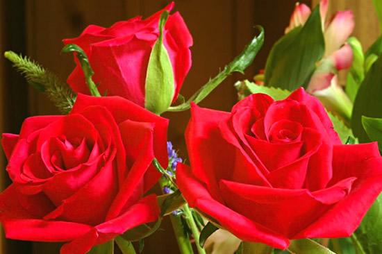 Rose immagine #274