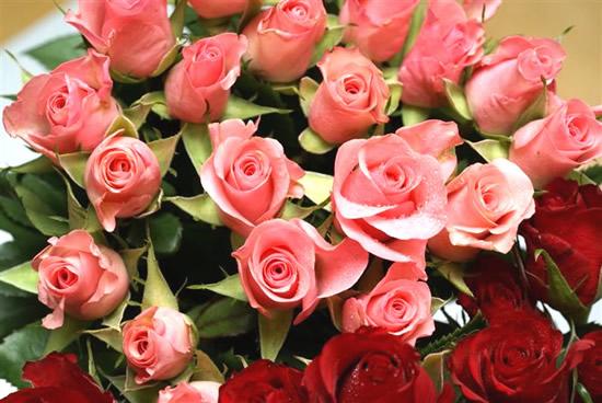 Rose immagine #281