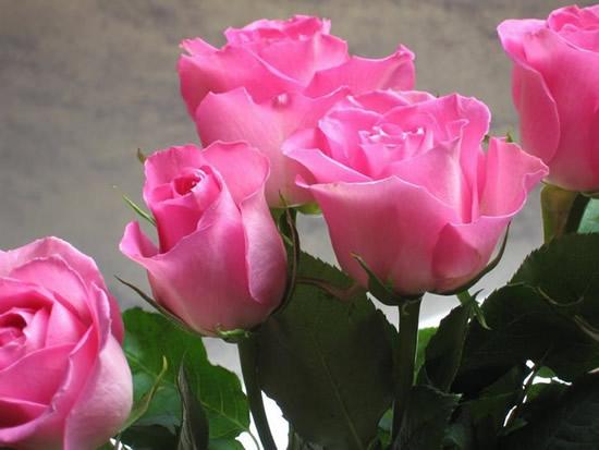 Rose immagine #284