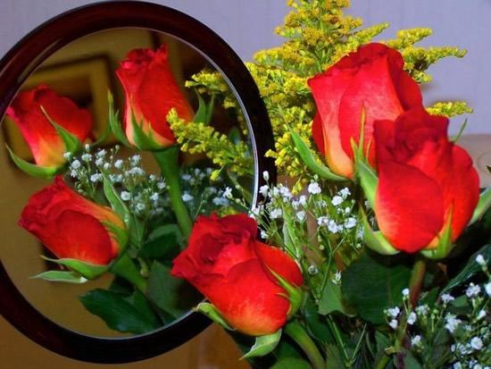 Rose immagine 10