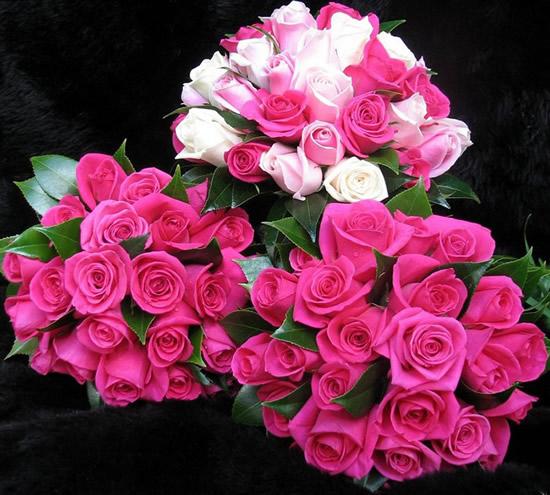 Rose immagine 1