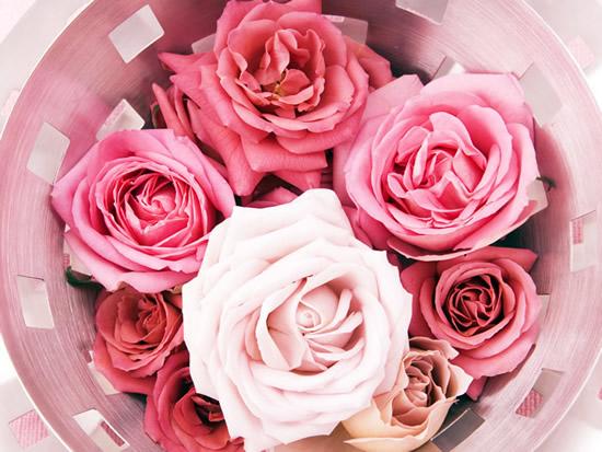 Rose immagine 8