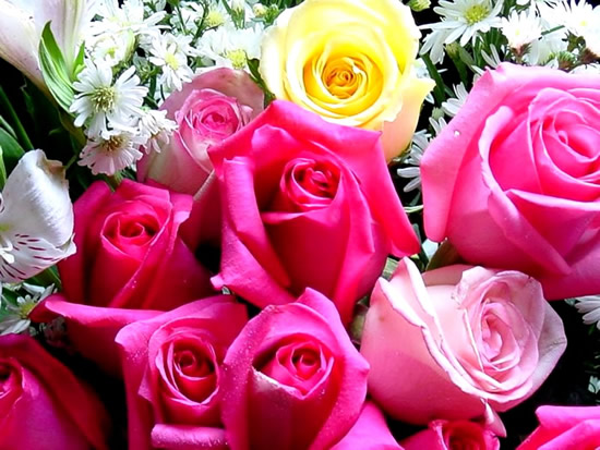 Rose immagine #325