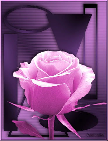 Rose immagine 6